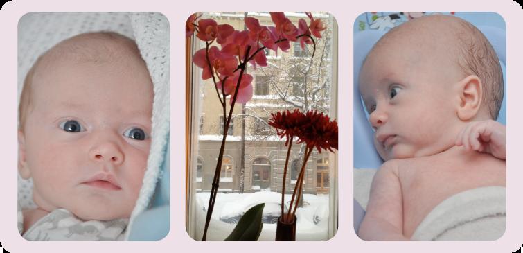 Alva, vintrigt fönster och Elliot 5/12 2012